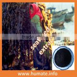 High Soluble Natural Kelp Source Seaweed Fertilizer