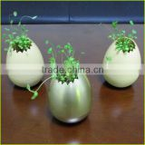 Environmental decoration magic egg shell flower plant pot without drainage holes
