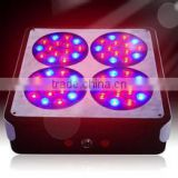 2013 best apollo 4 led grow light 3w 60pcs*3W for growing plants/Hydroponics alibaba made in China