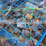 wire plastic coated crab trap, lobster trap