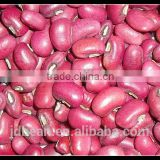 Crop 2014 Red cowpea beans