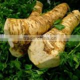 customized Horseradish root with ISO