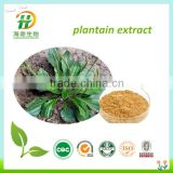 Plantain Extract Powder For Skin And Cancer