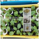 Super Agriculture Rock wool for planting 4x4x4cm