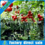 Economical Arch Pipes Greenhouse on Sale