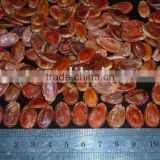 new crop plumpness red watermelon seeds for worldwide importers