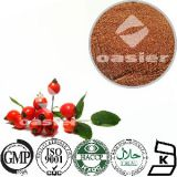 Manufacture supply nature rose hip extract feed ingredient rheumatoid arthritis