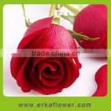 Lady favorite Hot sale high quality bud of rose fresh cut flower find buyers in foreign country