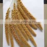 High Quality Foxtail Millet