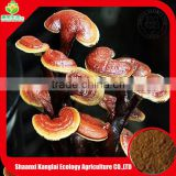 High Quality ISO Organic Certificate Lingzhi Reishi Mushroom 20:1 Extract Powder China Supplier