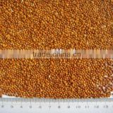 red broomcorn millet 2013 crop