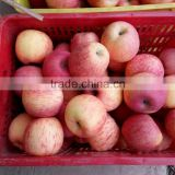 fuji apple for Dammam market