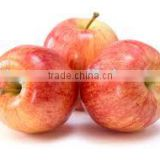 supply new crop fresh fuji apple with best price