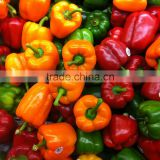 Fresh Capsicum - Frozen Capsicum- High Quality and Best Price