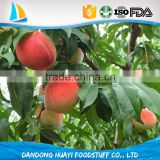 bulk frozen yellow peach at low price