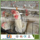 Trade Assurance Poultry Nipple Drinking System Battery Chicken Cages