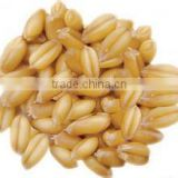 Factory price cold pressed wheat germ carrier oil bulk