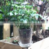 China Supplier wholesale transparent glass gardening pots for sale