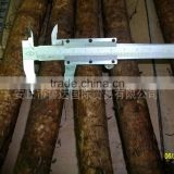 New Products 2013 Fresh China Burdock Root