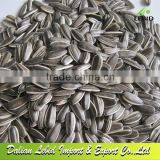 2014 Crop 5009 Sunflower Seeds 5009 24/64 American Type Lower price