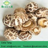 white flower shiitake mushroom without stem