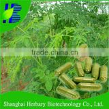 2016 Hot Sale! Top quality Moringa Capsule for nutritional supplement