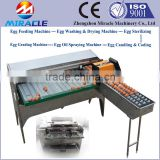 New Design Egg Grading Machine, Automatic Controller Eggs Grader Sorting Machine For Sale