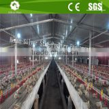 Steel structure design poultry farming shed with automatic feeding system