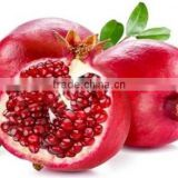 Fresh fruit export for russia