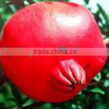 Hot Sale High Quality pomegranate extract Ellagic Acid and Punicalagins-pomegranate peeling machine