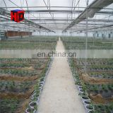 Winter greenhouse for hydroponic lettuce/vegetable greenhouse