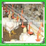 good quality of poultry chicken birds breeding layer eggs collection system feeding euipments with drinking and feeding machine