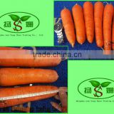[HOT] chinese fresh carrot/china fresh carrot/2014 fresh carrot