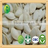 Pumpkin Seeds fresh cherry price chinese vegetable seeds