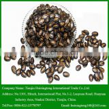 China Wholesale Black Watermelon Seeds for Human Consumption
