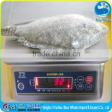 Frozen Tilapia WR 300-500g (the best Only the best)