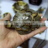 New animal cravings natural dragon septarian quartz crystal carved tortoise