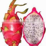 EXPORT FRESH DRAGON FRUIT WITH THE HIGH QUALITY and COMPETITIVE PRICE