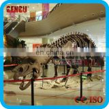 Shopping Mall High Quality Fiberglass Dinosaur Fossilien