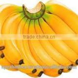 Spray Dried Banana Powder/Banana Pulp Powder