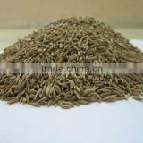 Best offer for Cumin seeds Singapore 98% 99% Quality from India