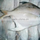 frozen sliver/white pomfret fish in fresh seafood
