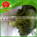 wholesale factory price China Fresh Broccoli Good Quality Broccoli