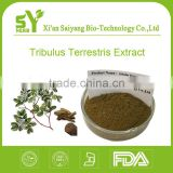 Tribulus terrestris extract,natural tribulus terrestris extract,organic tribulus terrestris powder