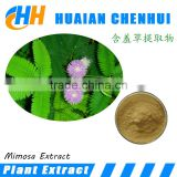 Sensitive plant Herb Extract / Mimosa Hostilis Extract powder