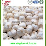 wholesale new fresh normal white garlic with good quality