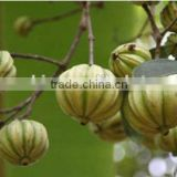 2015 Hot sale Garcinia Cambogia Extract / Pure Garcinia Cambogia Extract 50% HPLC/ Garcinia Combogia Extract 60% HPLC