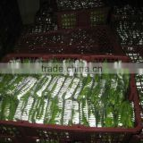 Fresh green peas for sale