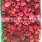 IQF Frozen raspberry whole with best price