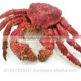 Hairy Snow Crab Antarctica